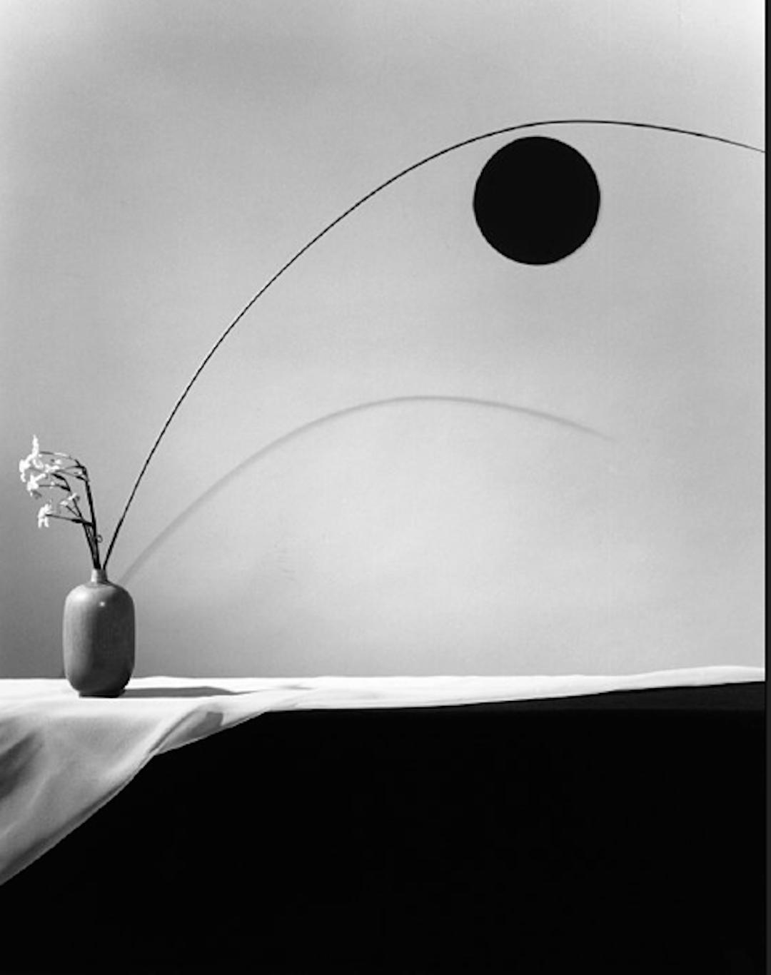 Flower 1983 by Robert Mapplethorpe