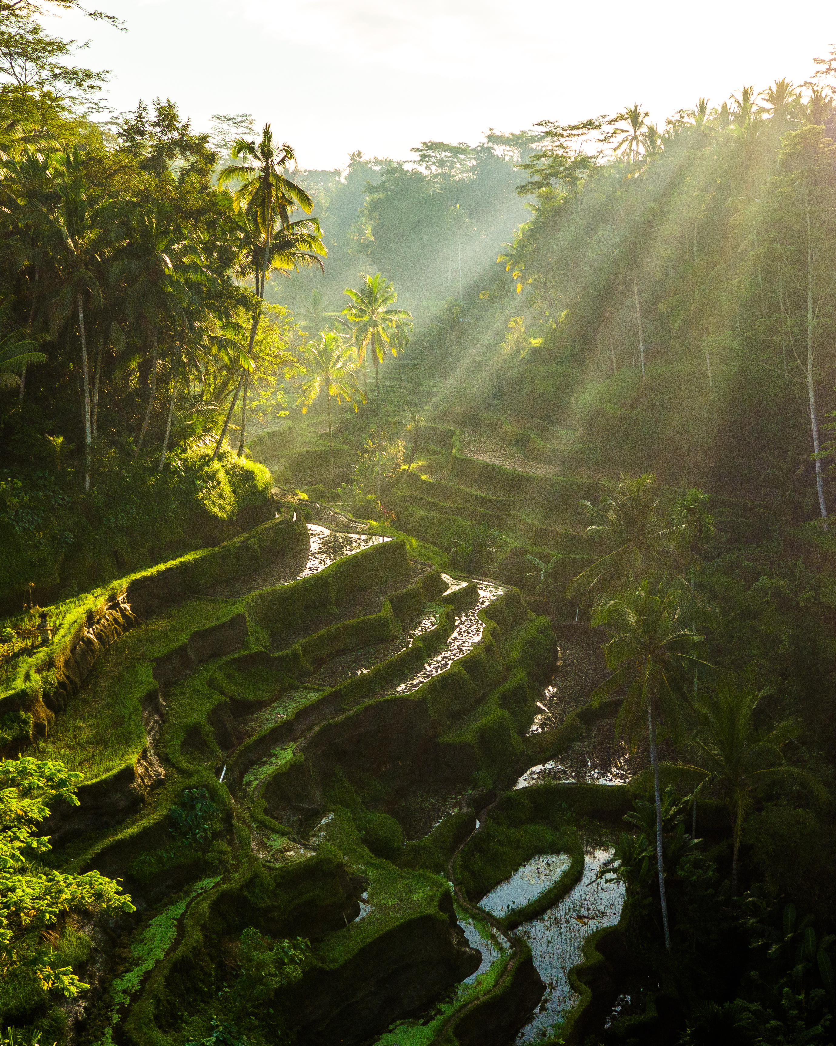Bali by Jacob Riglin