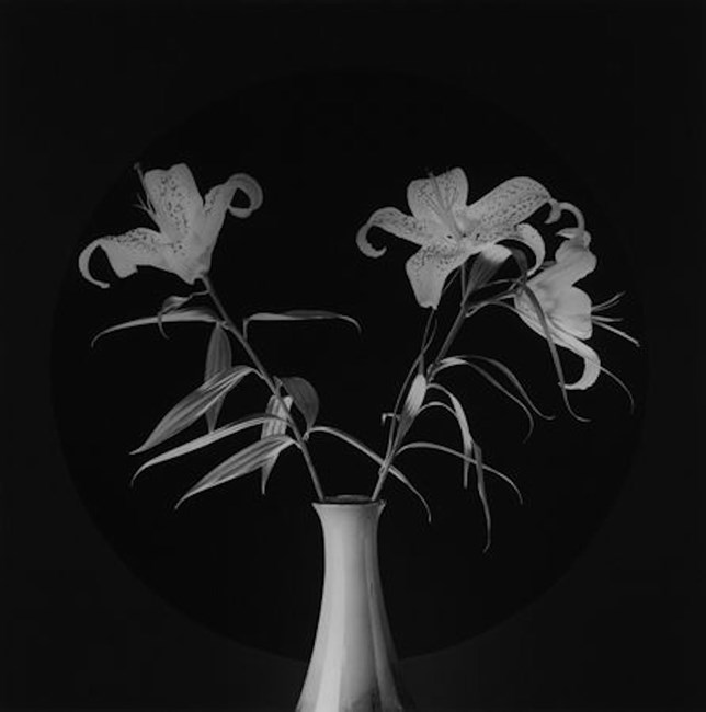 Lilies by Robert Mapplethorpe
