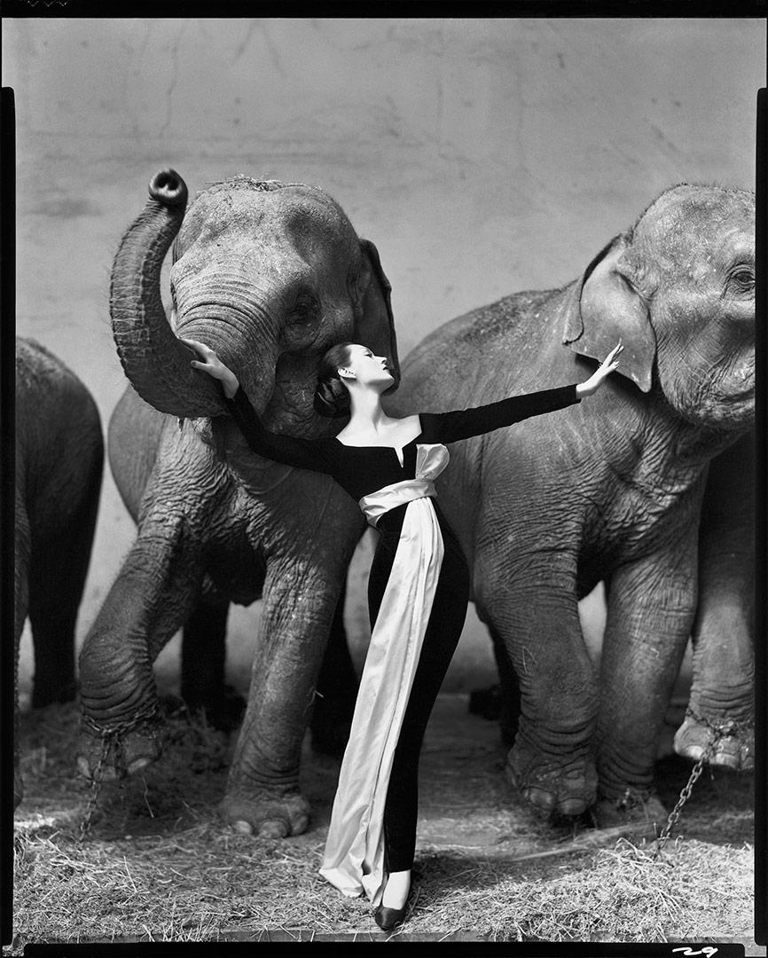 Dovima with Elephants by Richard Avedon