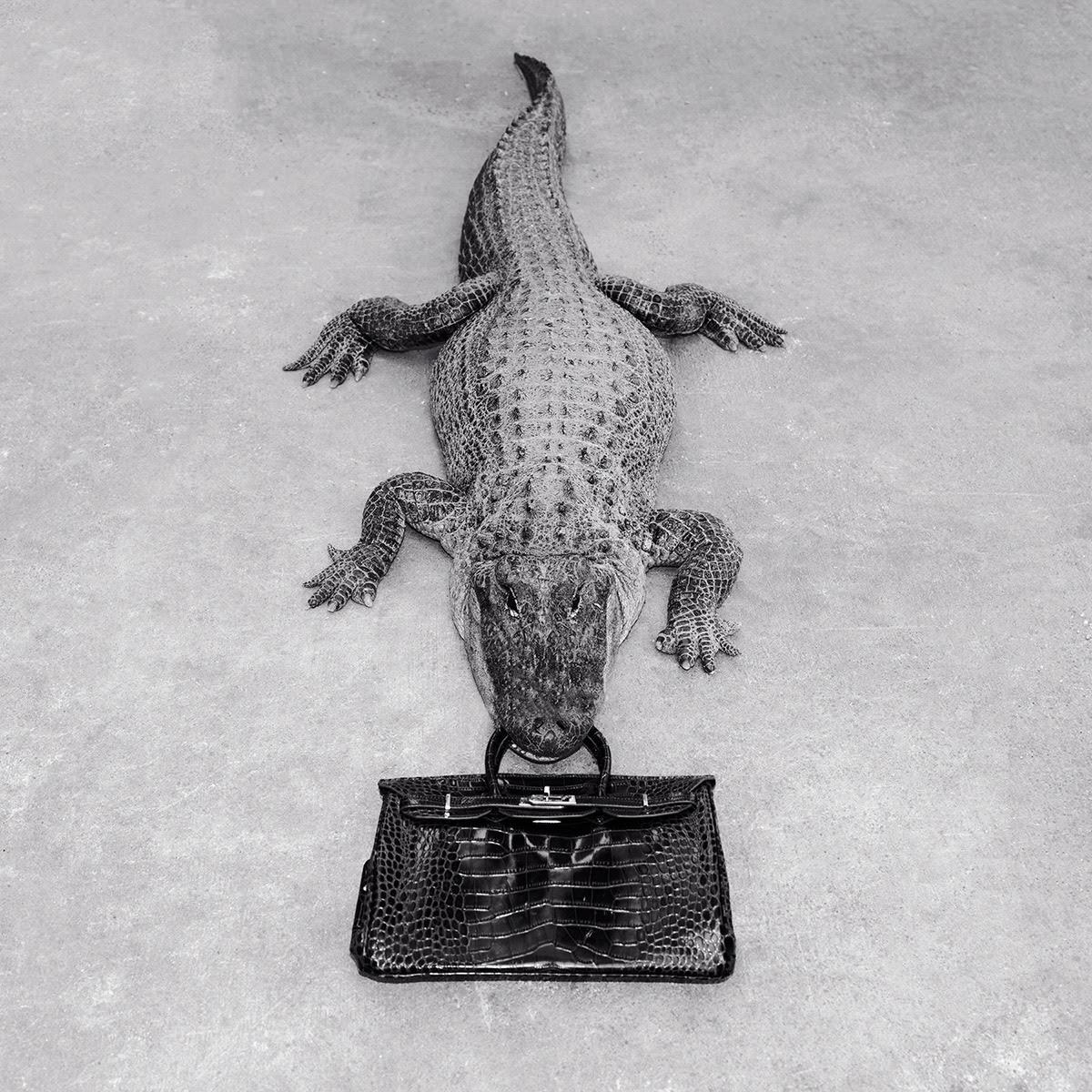 Gator Birkin (B&W) by Tyler Shields