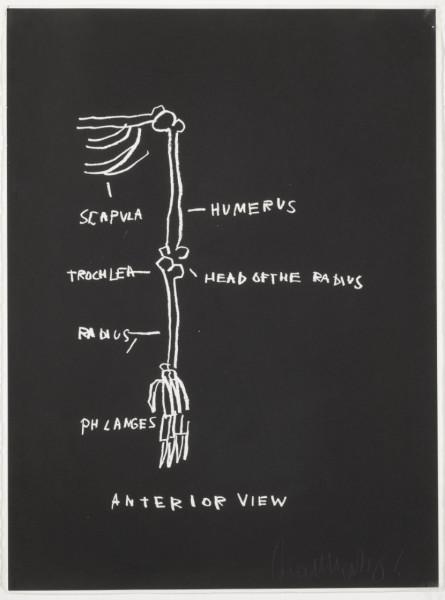 Anterior View by Jean-Michel Basquiat