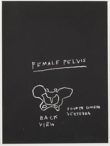 Female Pelvis, Back View by Jean-Michel Basquiat