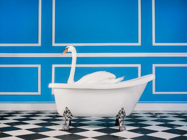 Swan by Tyler Shields