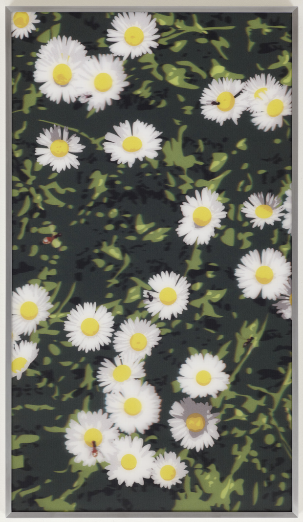 Daisies, from French Landscapes by Julian Opie
